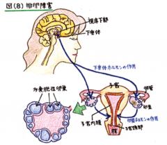排卵障害8